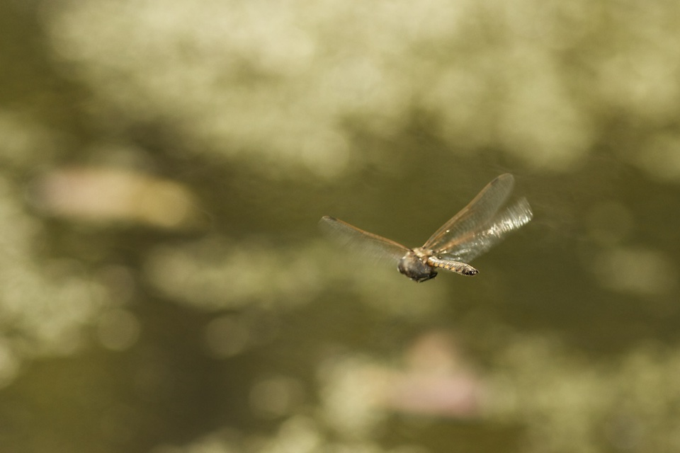 dragonfly departing