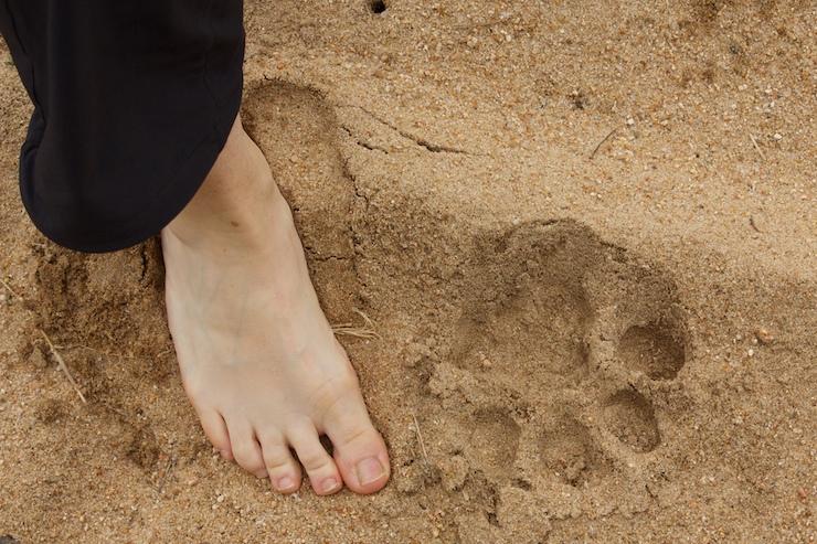 wight_foot0U7A96380U7A9638