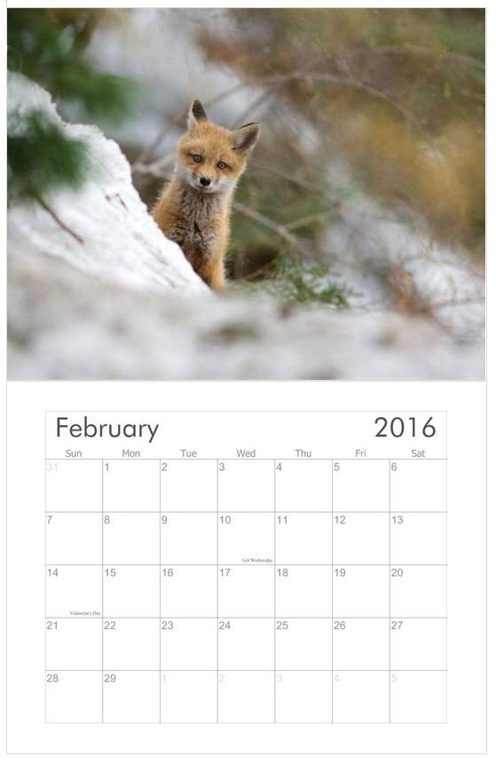 The Young Ones 2016 wildlife calendar