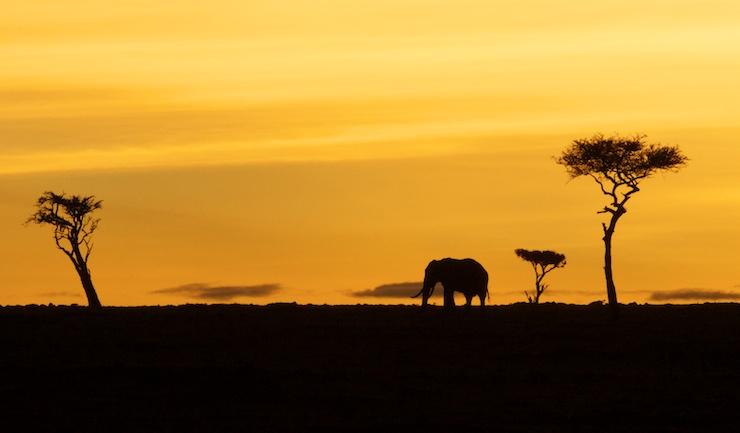 elephant safari silhouette