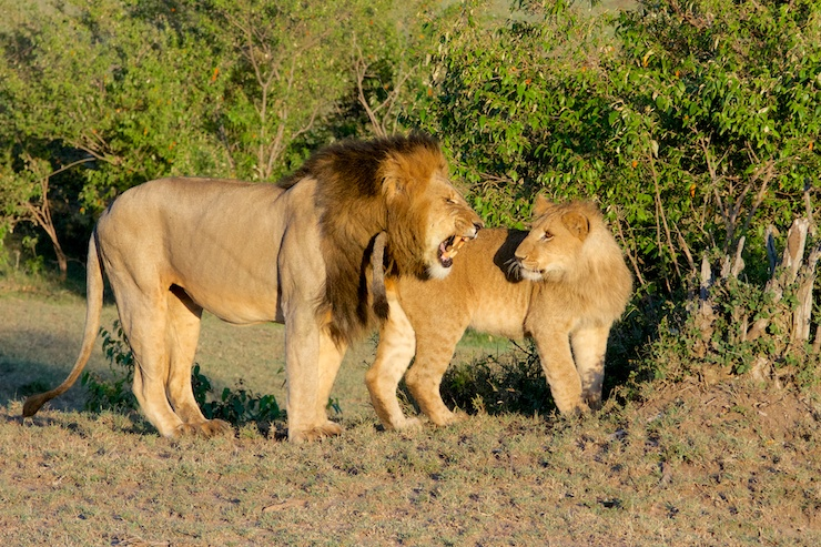 wight_lions_MG_6721_MG_6721