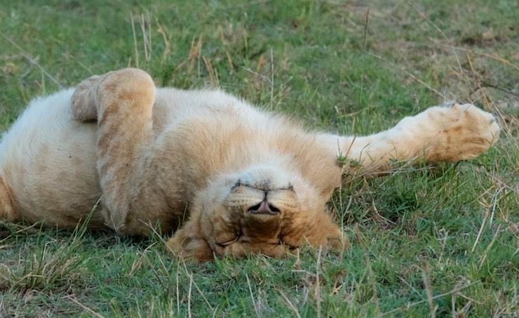 sleepy_cub_Wight__MG_6563