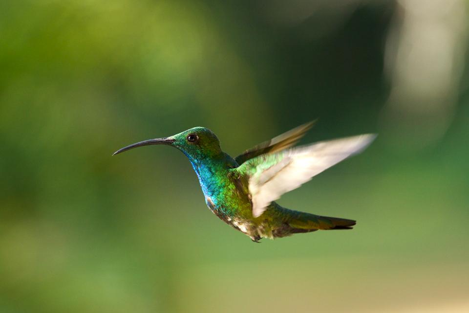 Rainforest Birds Flying Rainforest Birds Flyin...